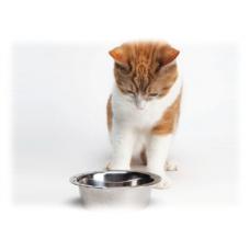 Как отучить кота от сухого корма
