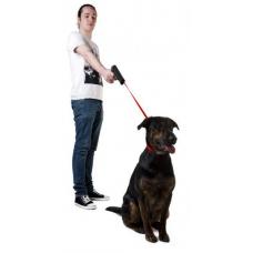 Как приучить собаку идти рядом
