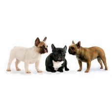 Как отучить собаку реагировать на других собак