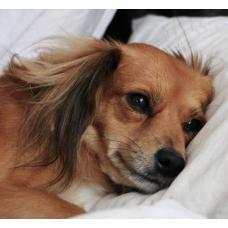 Уход за собаками после стерилизации