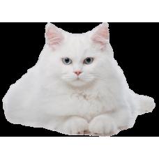 Уход за кошками после стерилизации
