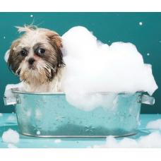 Приучить собаку к водным процедурам