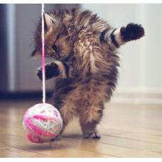 Во что поиграть с котом, игрушки, идеи для игр