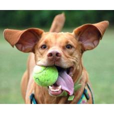 Как играть с собакой правильно: выбираем игрушки для питомца