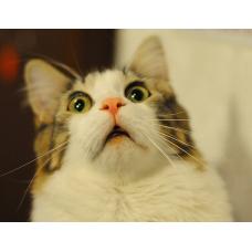 Удивительные факты о том, как удивительны коты