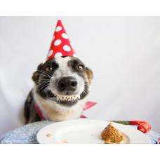 Что подарить собаке на день рождения