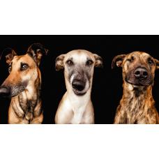 ТОП 25 удивительных фактов о собаках