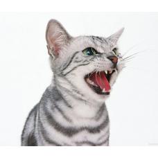 Весеннее обострение: кошачья весна!