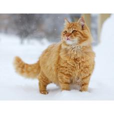 Зимние прогулки кошек – есть ли причина для волнения?
