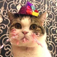 Что подарить коту на День рождения