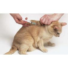 Болезни кошек и их симптомы