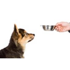 В какое время кормить собаку