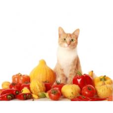 Какие витамины нужно давать кошкам