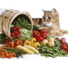 Чем нельзя кормить кошек