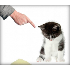 Как наказывать кота