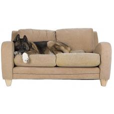 Собака в доме: советы по ее содержанию
