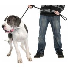 Как отучить собаку тянуть поводок