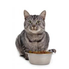 Cколько раз кормить кошку