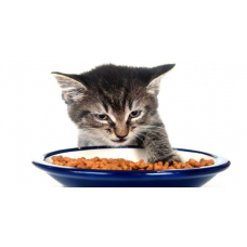 Какой корм для кошек полезен