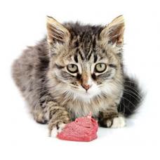 Можно ли давать кошкам печень
