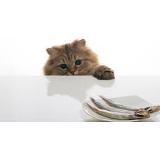 Как отучить кошку лазить на стол