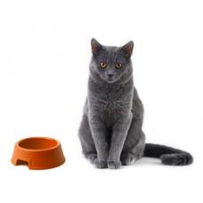 Чем кормить кота кроме корма