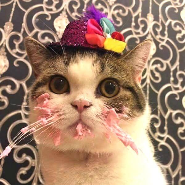 Что подрить коту или кошке на День Рождения