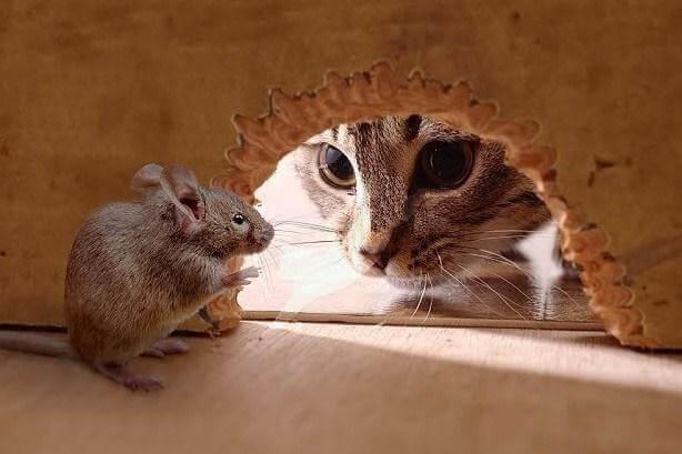 Коты защищали запасы пищи от грызунов